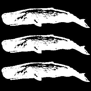 Wal Blauwal Pottwal Buckelwal Ozean Geschenk 26