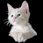 Kitten poesje