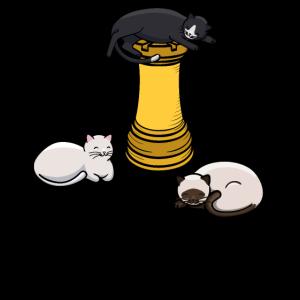 Schach Katze T shirt, Geschenk Kätzchen Fan Dame