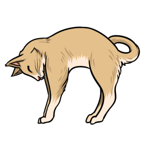 Katze Müde Yoga Lustige Tiere