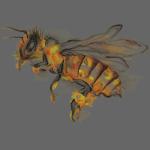 MG001 Biene | Honig | Save the Bees | Bücherbiene