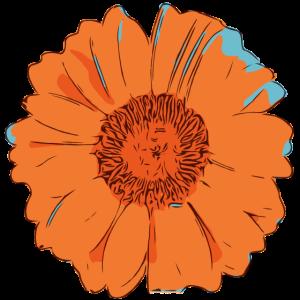 Blume orange Illustration