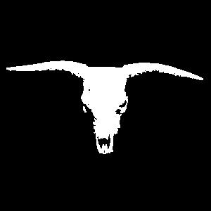 Bullenkopf Schädel Bulle Kopf Kuh Knochen Weiß