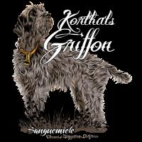 korthals_griffon