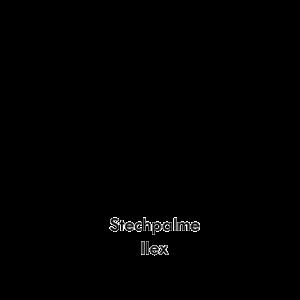 Ilex Stechpalme
