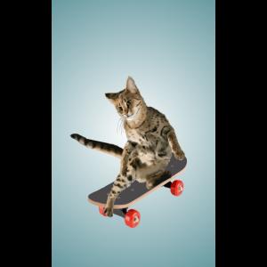 Handyhuelle Skaterkatze - Katze