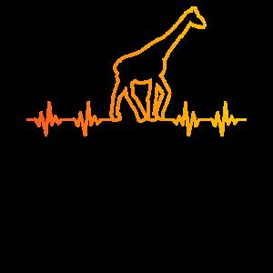 Frequenz Giraffen Afrika
