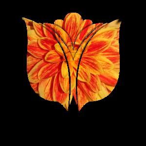 Tulpe flowercontest