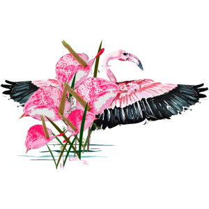 Flamingoblumen