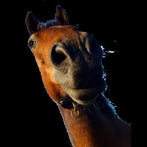 Pferdegesicht Foto Bild. Warum das lange Gesicht?