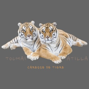 Toumaï et Atilla