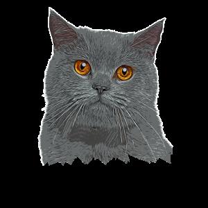 Britisch Kurzhaar Katze - BKH - Katzen Geschenk