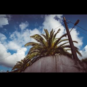 Palme unter dem Himmel auf den Azoren