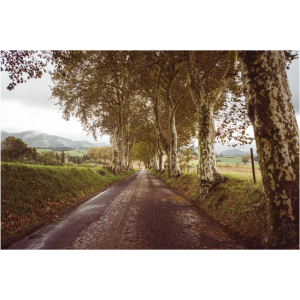 Landschaft auf den Azoren - Weg