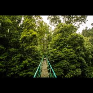 Brücke auf den Azoren im Urwald