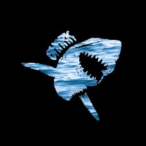 shark Hai Haifische Haie