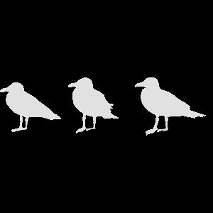 möwe seagull gull vogel hafen hamburg maritim meer