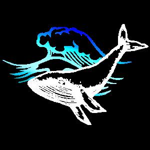 Meer Ocean Wale Blauwal Welle Wave whale sea ozean