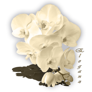 Orchidee ELEGANZ