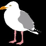 möwe seagull gull hafen segeln sailing hamburg