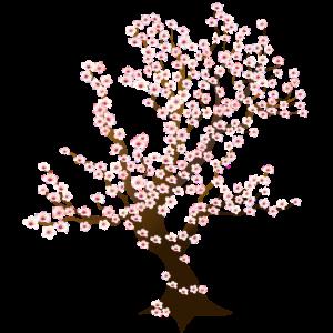Lebensbaum Kirschbluete