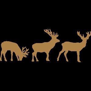 Hirsche Animation