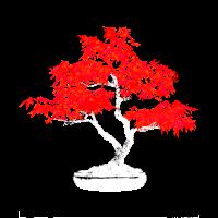 Bonsai einz