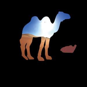Kamel in der Wüste Sahara Geschenk