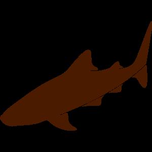Wildtiere: der Walhai
