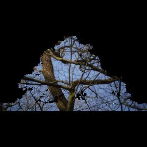 Baum Doppelbelichtung