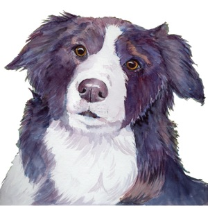 bordercollie color
