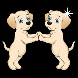 Zwillinge Hunde Labrador