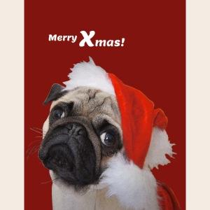Weihnachtsmopsportrait2
