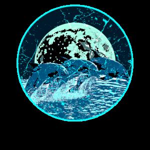 Delfine Ozean Mond