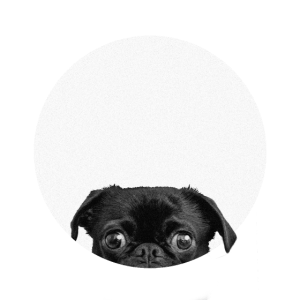 Pugs in shapes 2