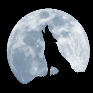 heulender einsamer Wolf bei Vollmond Geschenk