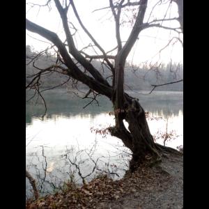 Stofftasche mit Baum im Winter