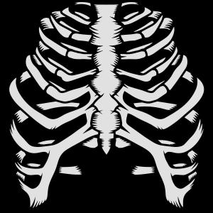 Skelett eines menschlichen Brustkorbs