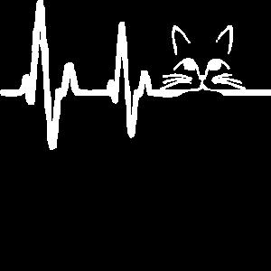 Katze, Katzen liebe, Katzenliebhaber, katzenfreund