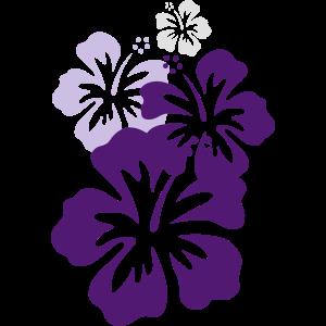 hibiskus violett