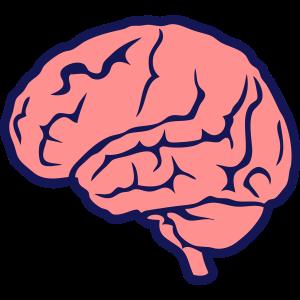 Gehirn menschliches Gehirn