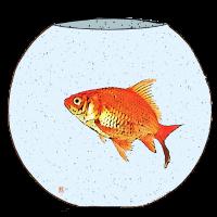 Poisson rouge / Goldfisch