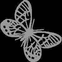 Schmetterlinge: Callitaera Aurora