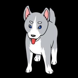 Husky Haustiere Hunderasse