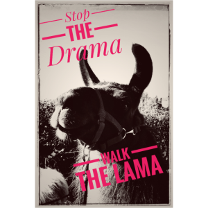 Lama Drama