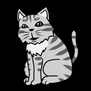 Katze Haustiere Tiere