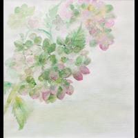 Blühende Hortensie - Aquarell