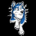 STUCK Husky Blau
