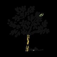 jeune olivier atelier kôta illustration dessins boutique produits artist