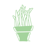 plante d'intérieur atelier kôta illustration dessins boutique produits artist